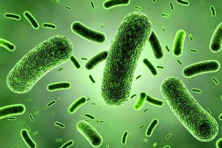allergens-bacteria