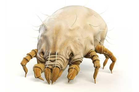 allergens-dust-mites