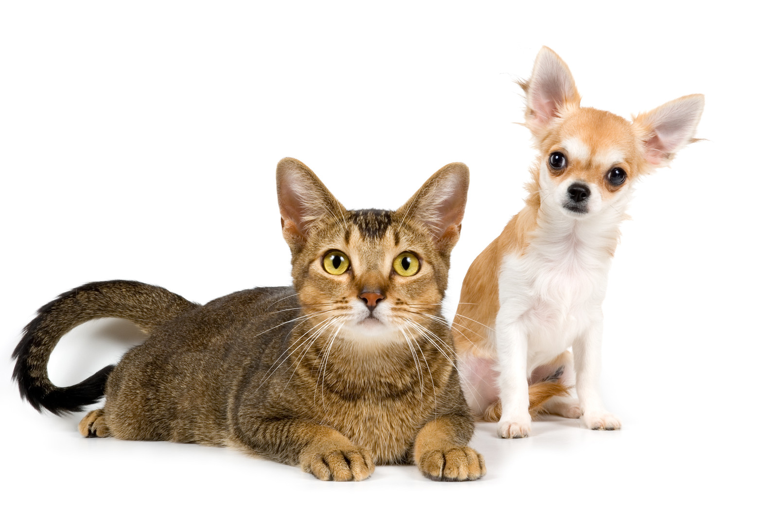 Getting Rid of Pets Odor